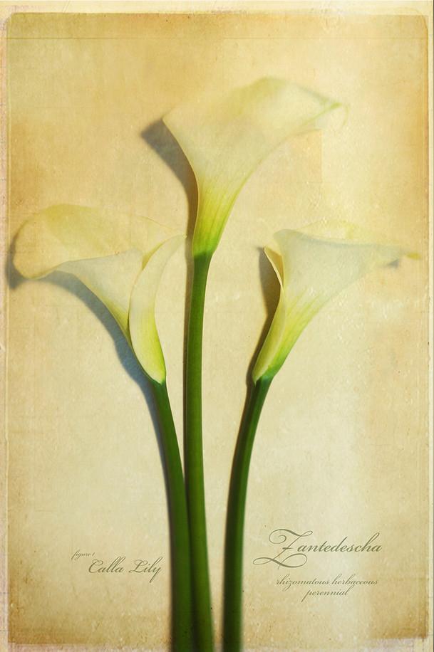 Botanical_02