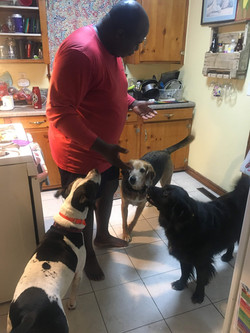 Dinner time for puppy pals
