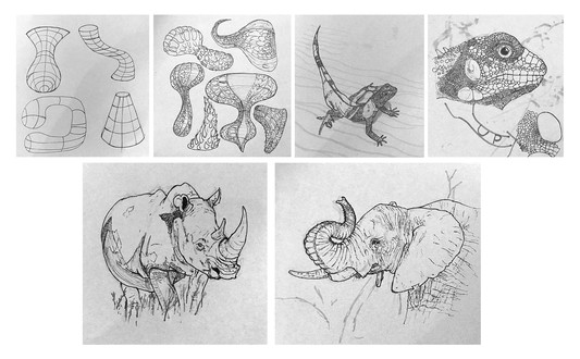 Shape, Amphibian, Animal