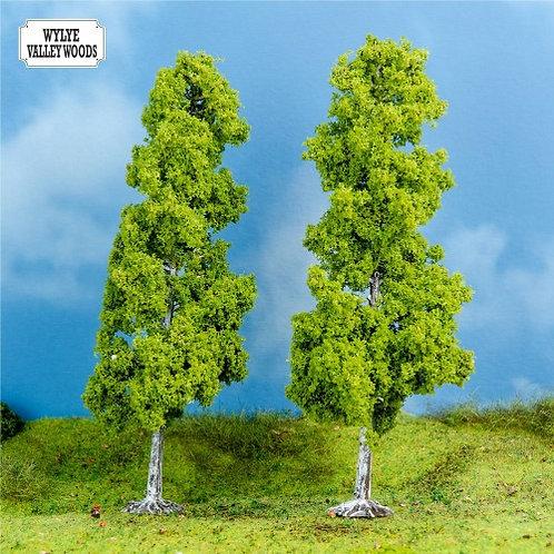 2 Large Birch Trees