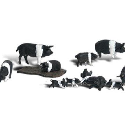 00 Gauge Figures Hampshire Pigs