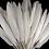 Thumbnail: Feathers