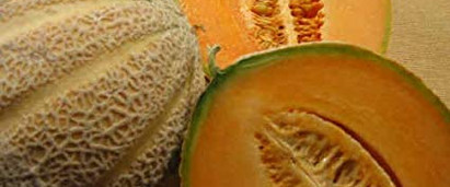 Cantaloupe Ambrosia.jpg