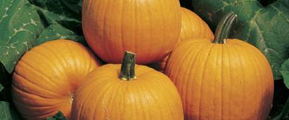 Pumpkin Howden.jpg