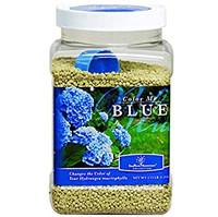 Color me Blue Hydrangea