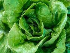 Lettuce Buttercrunch.jpg