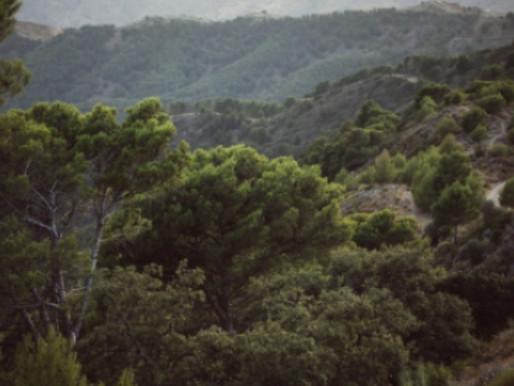 5 curiosidades sobre a Floresta Amazônica
