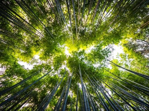Quais são as consequências do desmatamento?