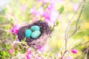 spring-4179306_1920.jpg