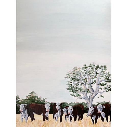'Herd of Herefords