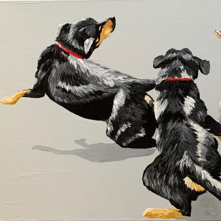 'Doggone it!'