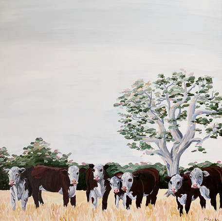 'Herd of Herefords'