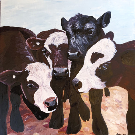 'Have I got moo's for you'
