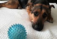 NÁJDITE SA ONLINE: Zvierací ombudsman spúšťa prvú slovenskú aplikáciu na adopciu zvierat
