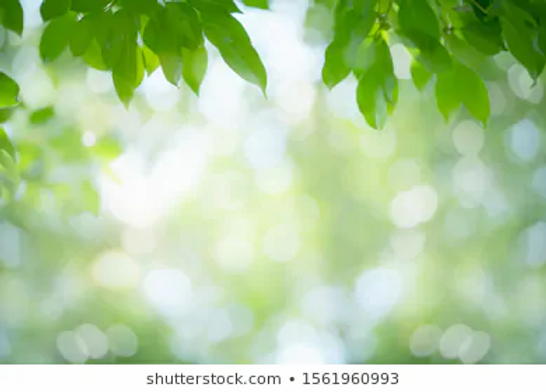 green-leaf-nature-on-blurred-260nw-15619