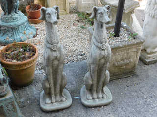 Pair of whippets