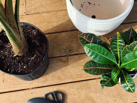 Repotting Plants!