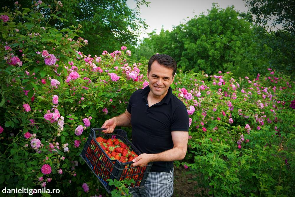Trandafiri de dulceata si capsuni