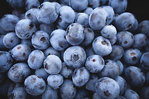 blueberries freshly picked