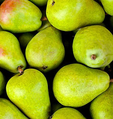 Many green pear from the orchard
