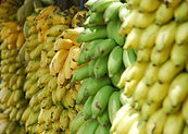 Many varieties of bananas