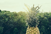 picture of a pineapple illuminated by sun and with a landscape in background