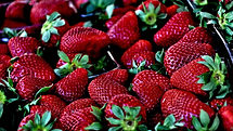 Many fresh strawberries