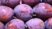 many plums illuminated by sun