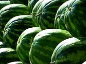 many watermelons illuminated by sun