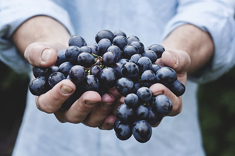 A man who hold a handful of fresh grapes