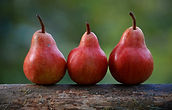 Three red pears aligned