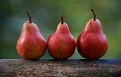 Trois poires rouges alignées sur un tronc