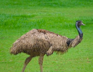 Emu fix.png