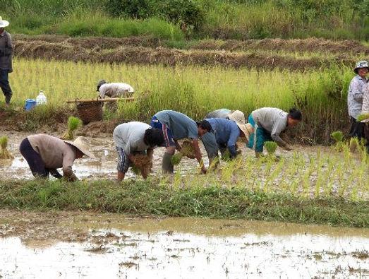 Herschaalde kopie van Reis Thailand 422.