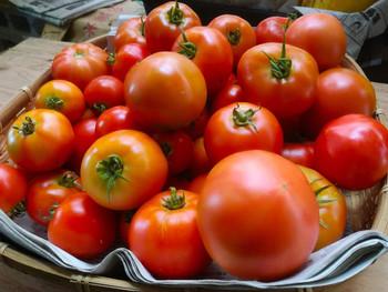 トマト終わり