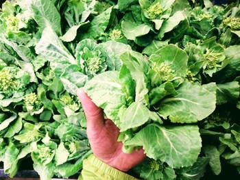 露地野菜の春の端境期