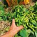 枝豆、ビール、クラフト野菜