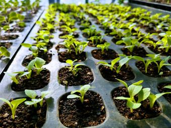 不耕起栽培の最大のメリットは生物の増加による栽培環境の安定