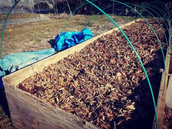 踏み込み温床と夏野菜の育苗から考える持続可能性。