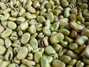 空豆の脱粒