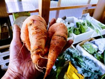 野菜のルックス