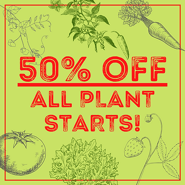 Copy of 50% OFF All PLANT STARTS! (2).pn