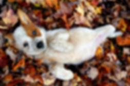fall-puppies.jpg