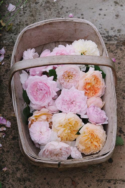 Trug of Roses