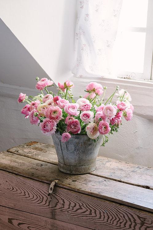 Bucket of Ranunculus