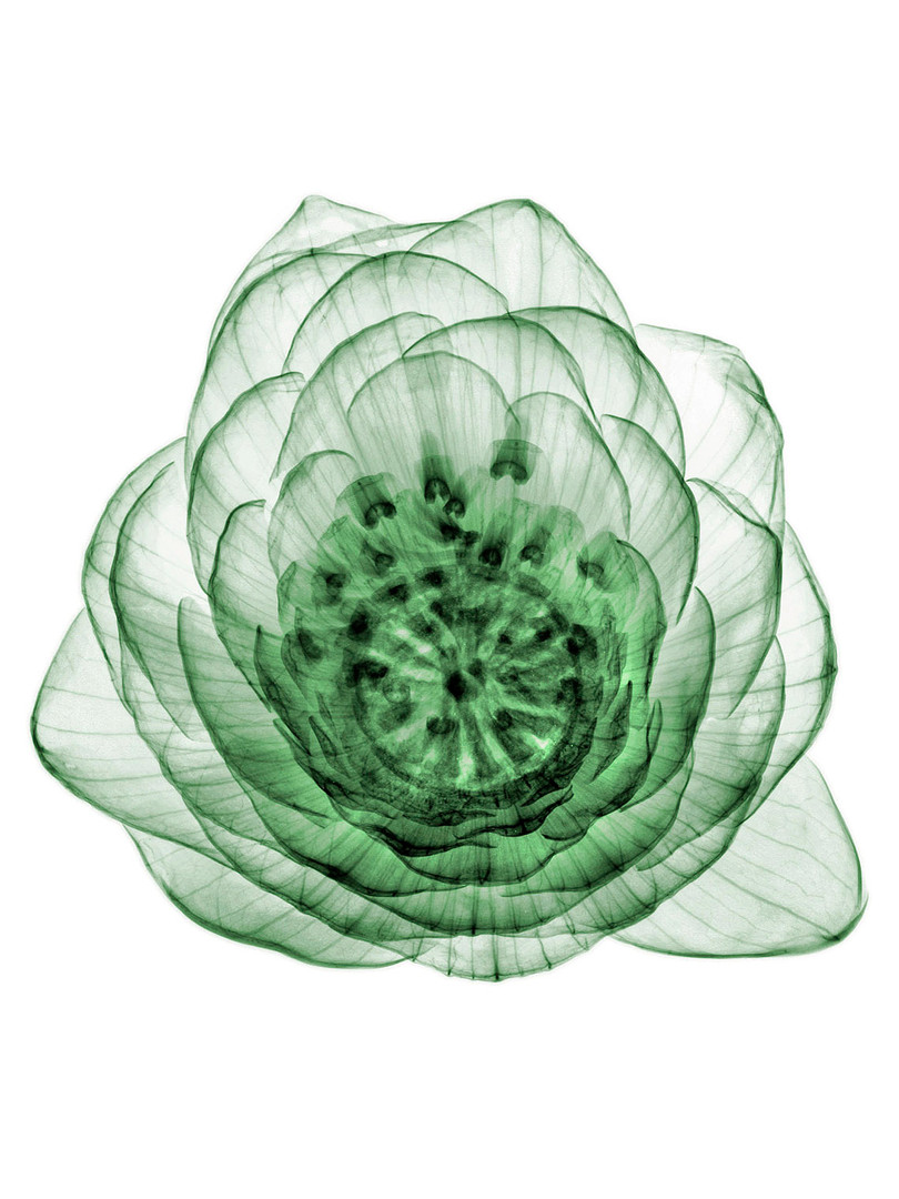 Mans Flower 2.jpg