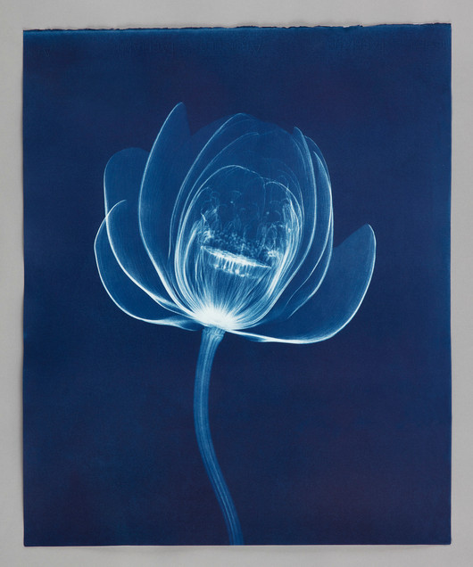 Lotus Cyanotype.jpg