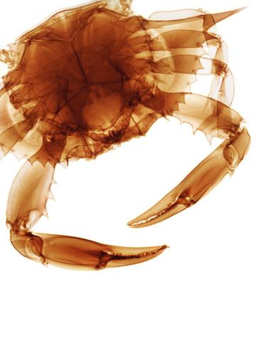 Crab_edited.jpg