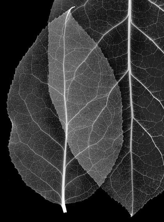 02-Leaves_4.jpg