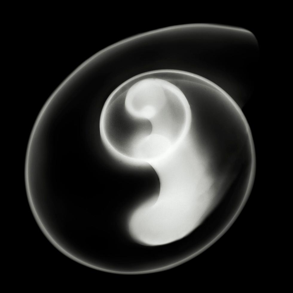 curvy-shell-v2-flat.jpg